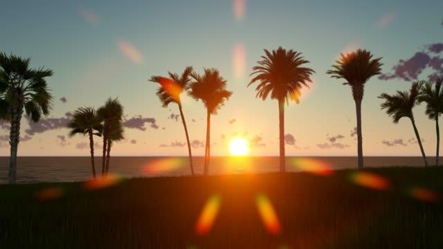 sunset on the beach with palm trees - palm tree filmów i materiałów b-roll