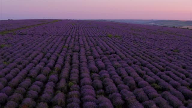 vídeos de stock e filmes b-roll de sunset on the lavender fields in moldova - lavanda planta