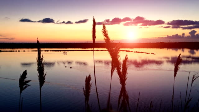 Sunset on the saltwork saline of Tarquinia Sunset on the saltwork saline of Tarquinia turks and caicos islands stock videos & royalty-free footage