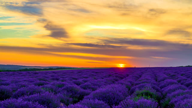 Sunset Over A Field Of Lavender Time Lapse Of Sunset Over A Field Of Lavender. provence alpes cote d'azur stock videos & royalty-free footage