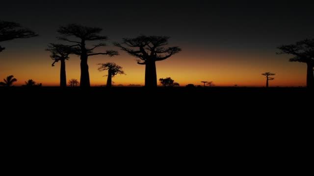 solnedgång över gränden av baobabs, madagaskar - morondava bildbanksvideor och videomaterial från bakom kulisserna