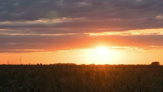 vídeos de stock e filmes b-roll de sunset over corn field time lapse - prado