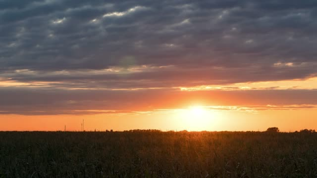 Sunset over corn field time lapse sunset in the steppe, sunset in prairie, red sun over field, morning sun over the field hyper lapse horizon over land stock videos & royalty-free footage