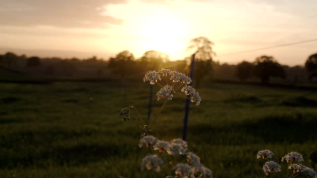 Sunset Over The British Countryside With Electric Fence video