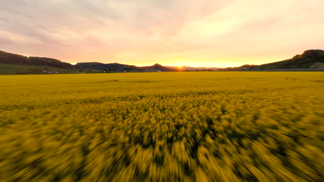 HD HELI: Sunset Over The Canola Field video