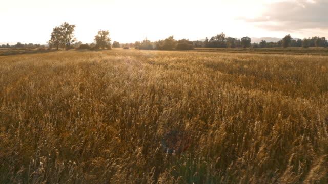 空から見た夕暮れ時の草原上 - マルチコプター点の映像素材/bロール