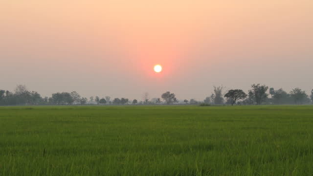 Sunset over the rice field (Time lapse). video