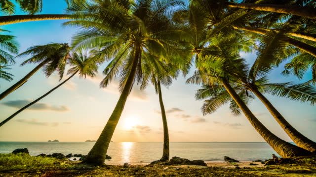 Sunset over the sea behind palms Sunset over the sea behind palms 4k sunset to night time lapse stock videos & royalty-free footage