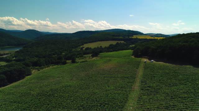 Sunset over vineyard field in valley, Europe. Aerial view. Video