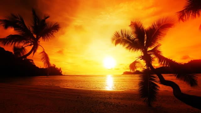 Sunset , palms, ocean. video