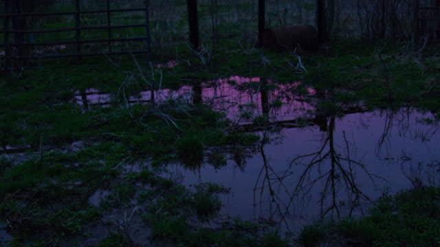 stockvideo's en b-roll-footage met zonsondergang weerkaatst plas op boerderij - verlaten slechte staat