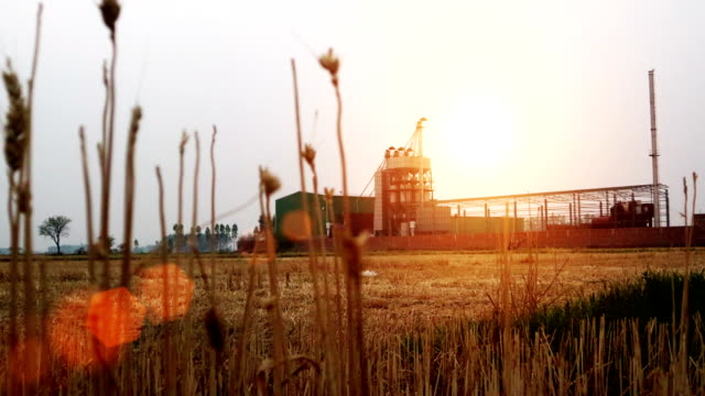 Sunset rice mill production factory, India 4K Video : - Rice mill factory, process production line in Haryana, India. rice cereal plant stock videos & royalty-free footage