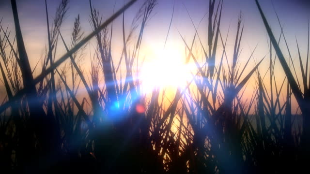sunset sea grass video