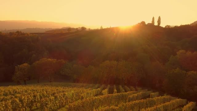 ws sunset skiner över lugna, idylliska landsbygden vingård sluttning, spicnik, slovenien - steiermark bildbanksvideor och videomaterial från bakom kulisserna