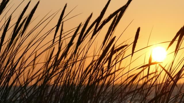 sonnenuntergang silhouetten von dünengras - ostsee stock-videos und b-roll-filmmaterial