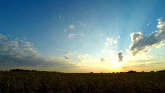 Sunset Sky over a Wheat Field video
