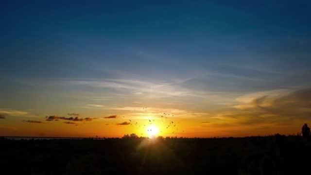 sunset sky med horizon och bird flock silhouette - abstract silhouette art bildbanksvideor och videomaterial från bakom kulisserna