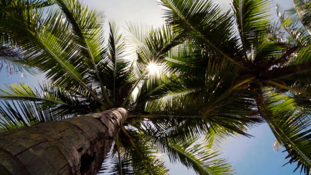 Sunset through Coconut Tree Sunset through Coconut Tree coconut palm tree stock videos & royalty-free footage