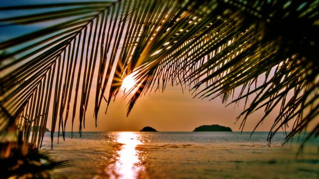 Sunset through palm tree