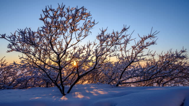 Sunset through the branches. video