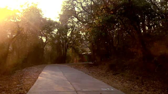 solnedgång tid skog sätt - bilperspektiv bildbanksvideor och videomaterial från bakom kulisserna