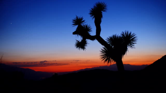 Sunset time lapse in Joshua Tree National Park video