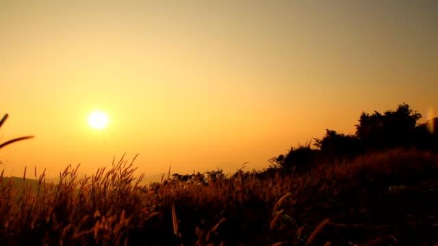 Sunset Timelapse against Cityscape video