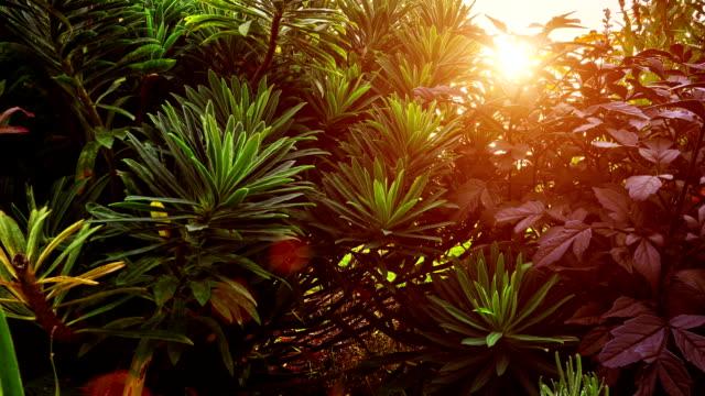 SLIDER; Sunset timelapse through garden flowers Sunset timelapse through garden flowers. flowerbed stock videos & royalty-free footage