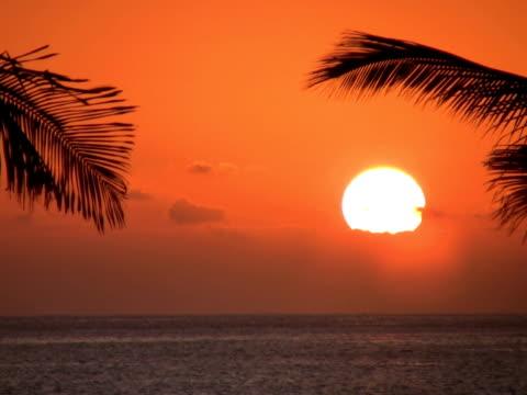 ntsc: tramonto - parte della pianta video stock e b–roll