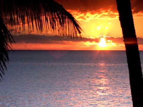 vidéos et rushes de ntsc : coucher du soleil - angiosperme