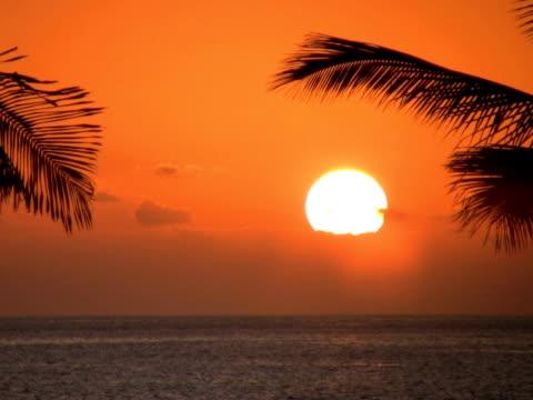 pal: tramonto - parte della pianta video stock e b–roll