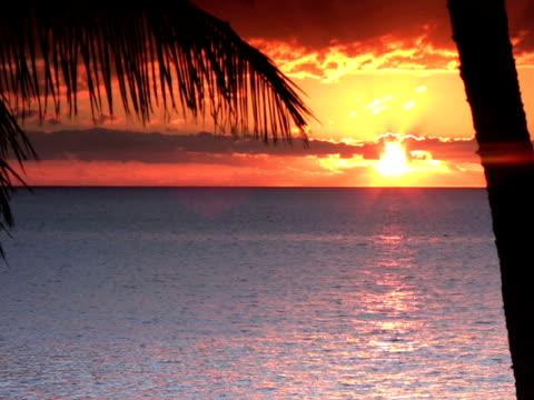 vidéos et rushes de pal : coucher du soleil - angiosperme