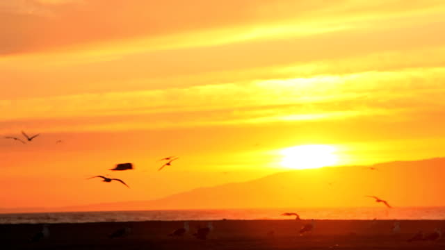 Sunset with Birds video