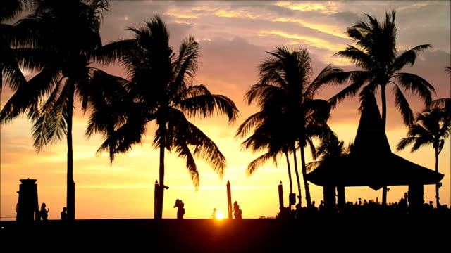 Sunset with coconut palm trees video