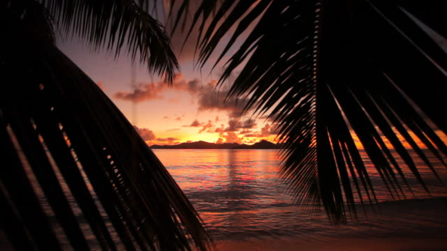 sunset with palm leaves video