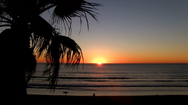 Sunset with palm tree overlooking Pacific Beach San Diego cliffs California video