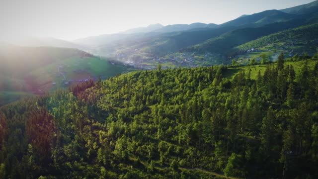 solsken över gröna skogen - städsegrön växt bildbanksvideor och videomaterial från bakom kulisserna