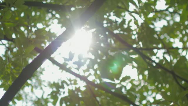 太陽から緑の葉 ビデオ
