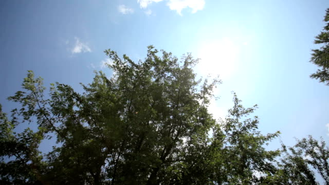 Sunshine Through Leaves Slider Sunbeam through the leaves of a tree against a blue sky with white clouds midday stock videos & royalty-free footage