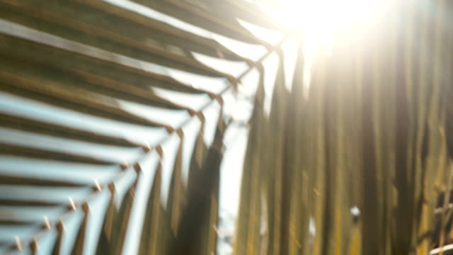 Sunshine through palm leaves with sun background with lens flare effects video