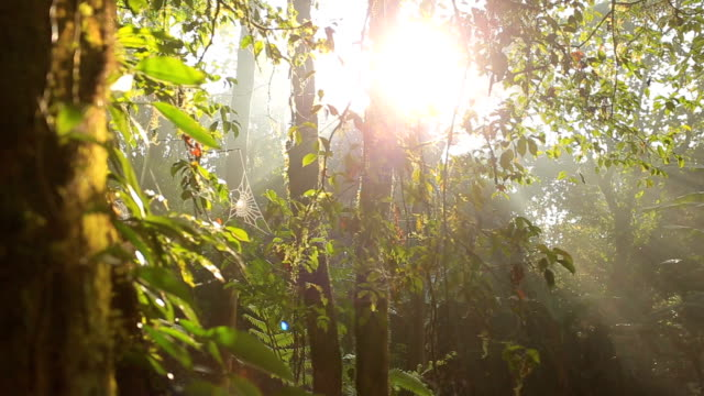 Sunshine Sunshine and mist in the forest. heat haze stock videos & royalty-free footage