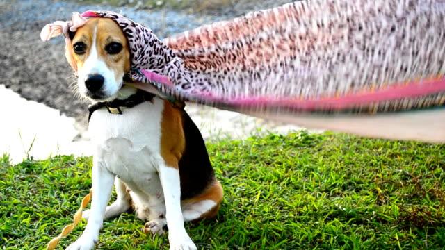 Super dog Super dog cape garment stock videos & royalty-free footage
