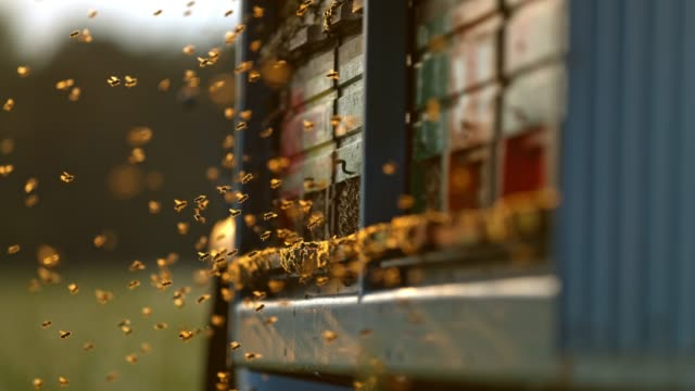 CU Super slow motion bees flying,hovering at beehive