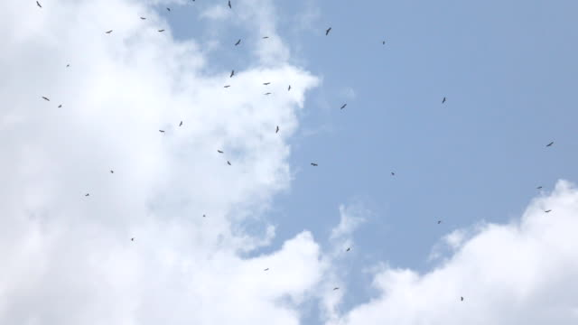Super slow motion Bird in the sky