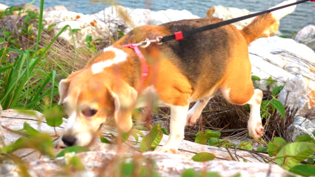 Super Slow motion Dog run on Mountain video