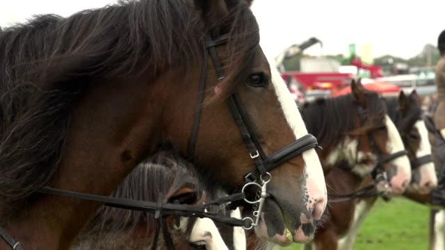 super slow motion hd - horses waiting to race - horse racing stok videoları ve detay görüntü çekimi