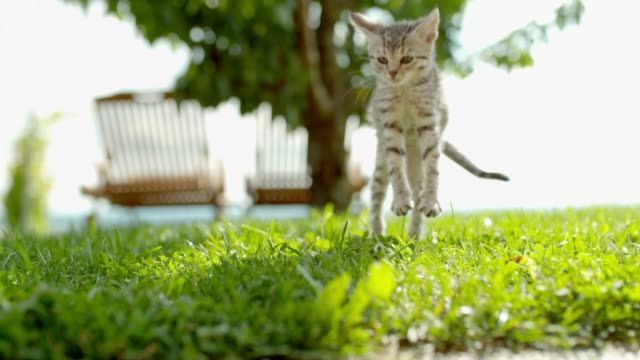MS Super slow motion kitten falling and landing in sunny green grass