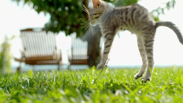 日当たりのいい緑の草の上に落下 ms スーパースローモーション子猫 - ネコ科点の映像素材/bロール