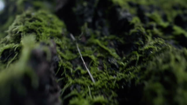 Super Slow Motion : MOSS