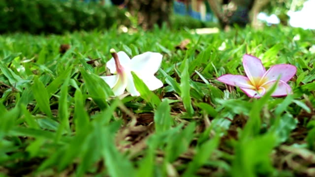 Super Slow Motion of many Flowers falling down to green grass ground and pump up video